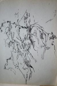 Caroubier 5