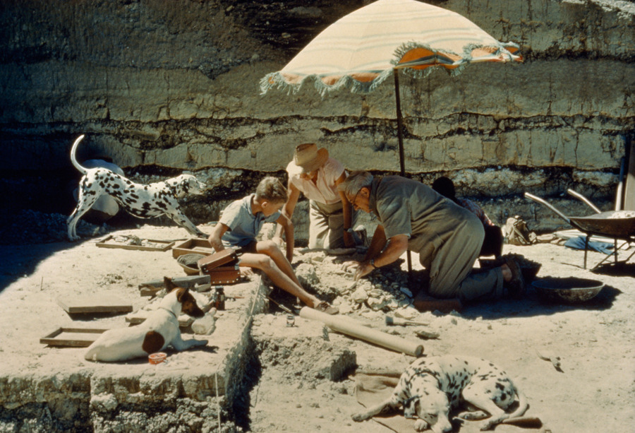 Louis Leakey and his family inspect the campsite of an early hominid in Tanzania, November 1961.